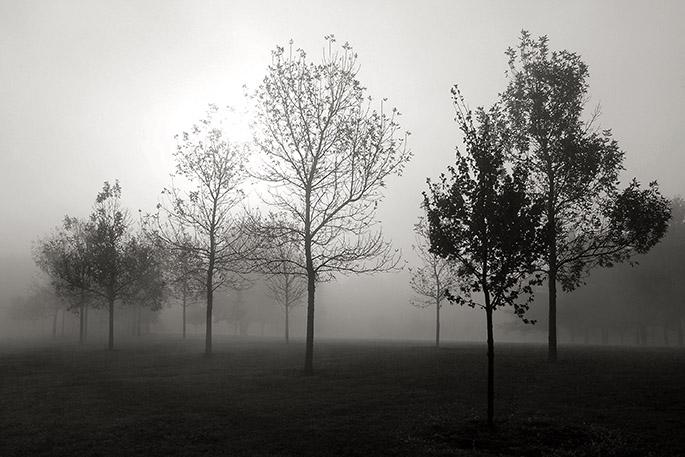 Fog at Wegerzyn Gardens Metro Park Dayton Ohio
